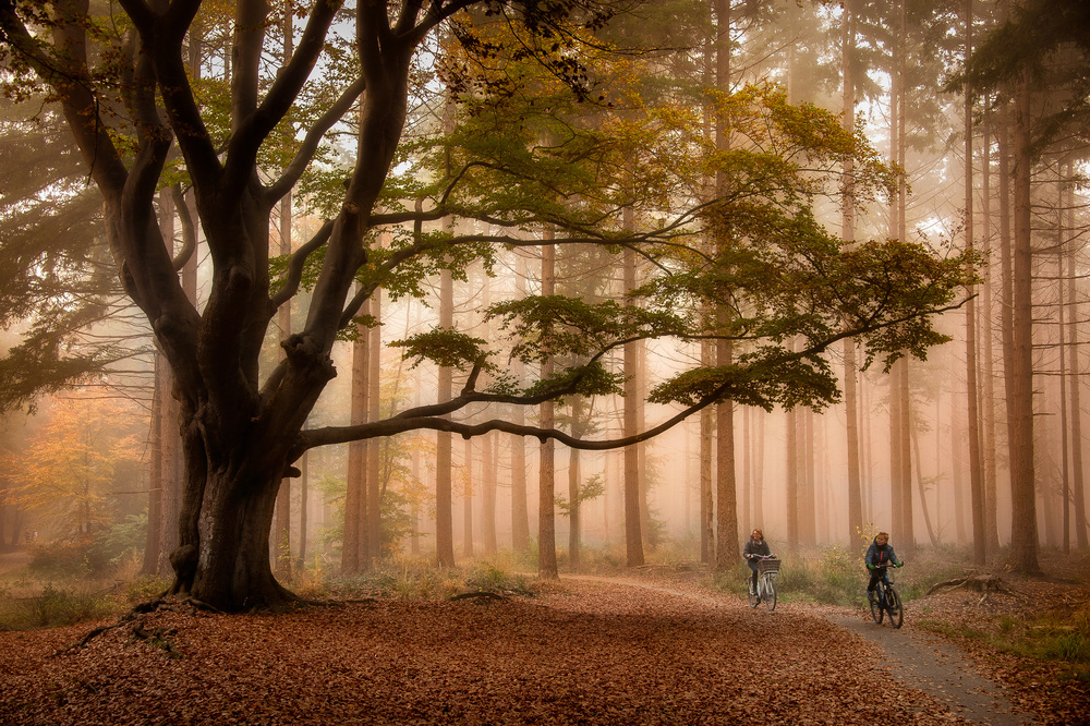A piece of fine art art photography titled  Just Passing By by Piet Haaksma