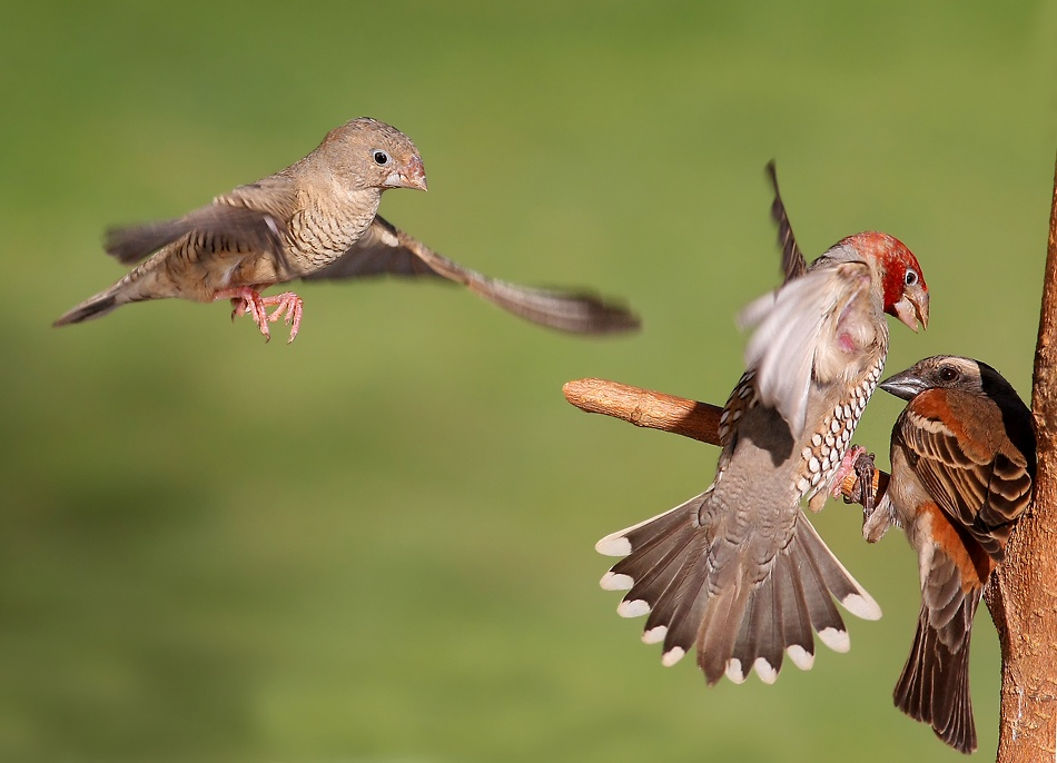 A piece of fine art art photography titled 3 Birds Fightning 2 by Francois Loubser