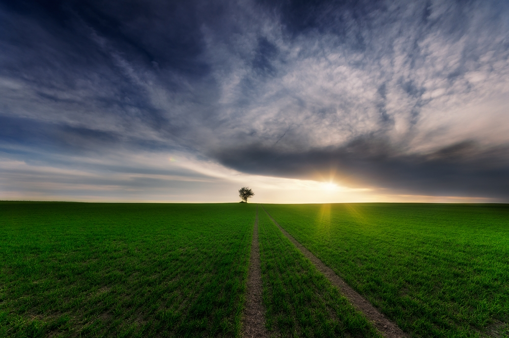 A piece of fine art art photography titled Loner In the Sun by Piotr Krol (Bax)