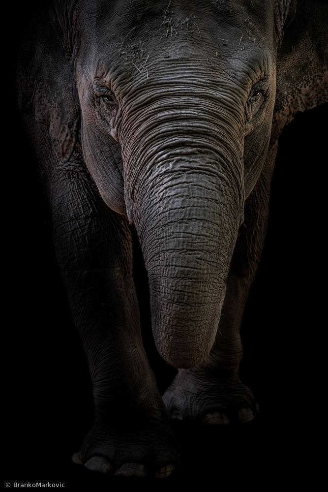 View this piece of fine art photography titled Dumbo by Branko Markovic