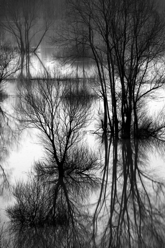 A piece of fine art art photography titled Lords of Floodland  by Dare Turnsek