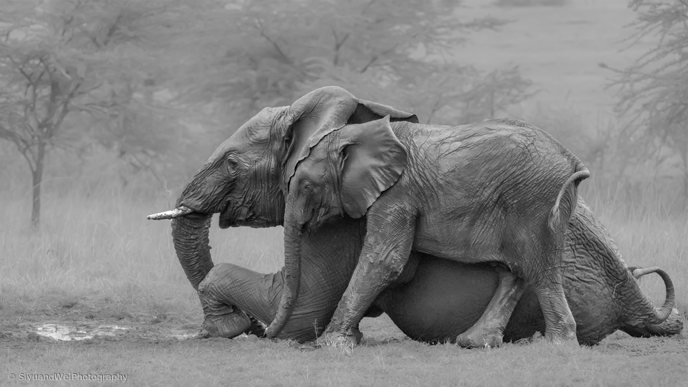 View this piece of fine art photography titled Mother Elephant and Her Calf by Alessandro Rossini