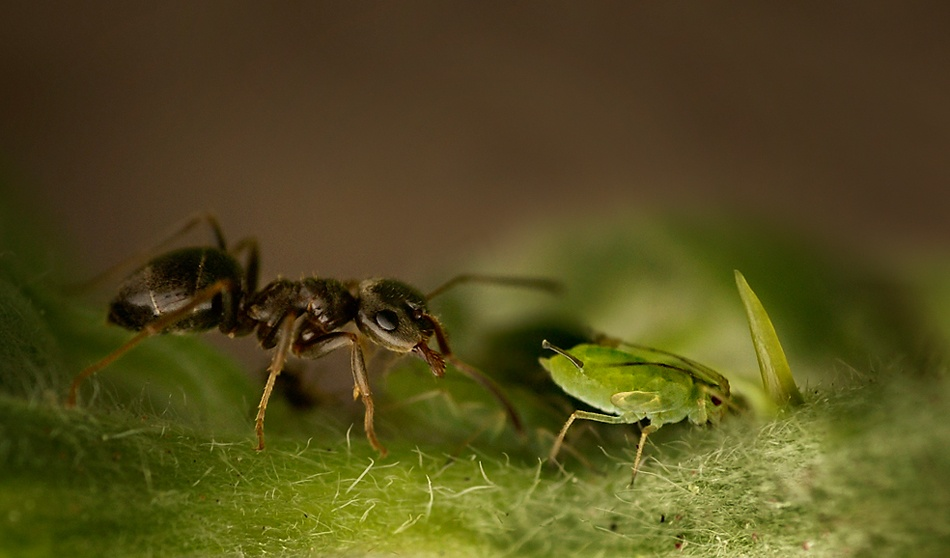 A piece of fine art art photography titled The Louse and the Ant by Mascha van Lynden