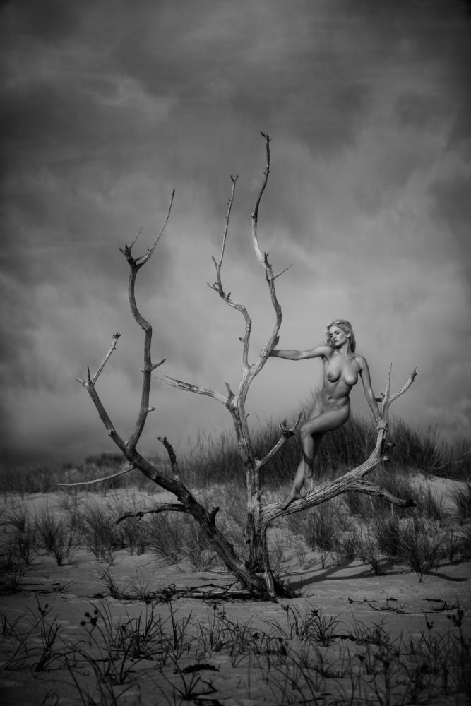 A piece of fine art art photography titled Driftwood by JAE