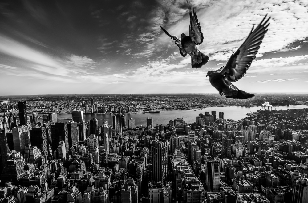 A piece of fine art art photography titled Pigeons On the Empire State Building by SergioSousa