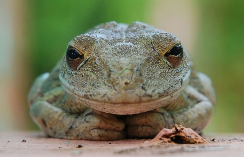 A piece of fine art art photography titled Tree Frog by Andrew Hosking