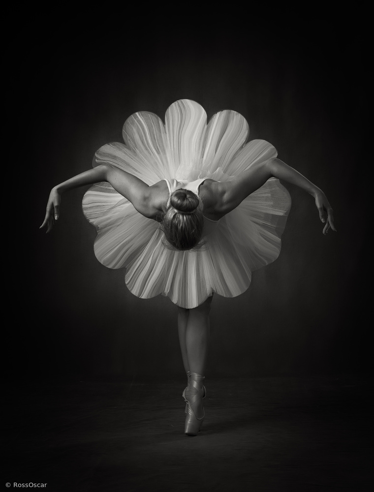 View this piece of fine art photography titled Floral Ballet by Marzena Wieczorek