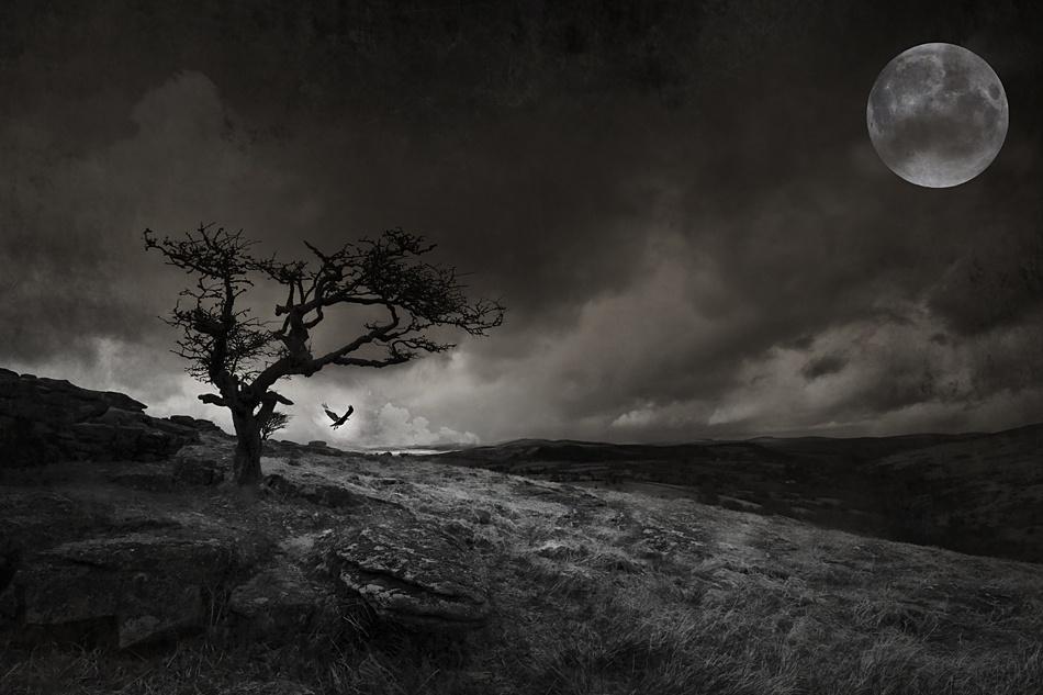 A piece of fine art art photography titled Dartmoor Crow by Cloud Inspector