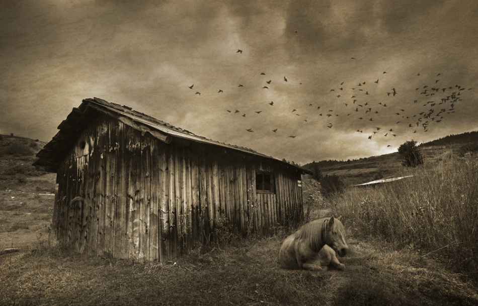 A piece of fine art art photography titled Shh by kamenf