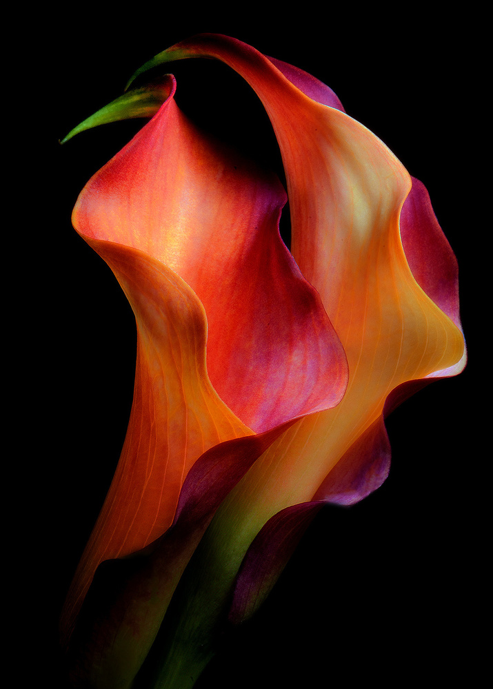View this piece of fine art photography titled Tenderness by Jon  Kinney