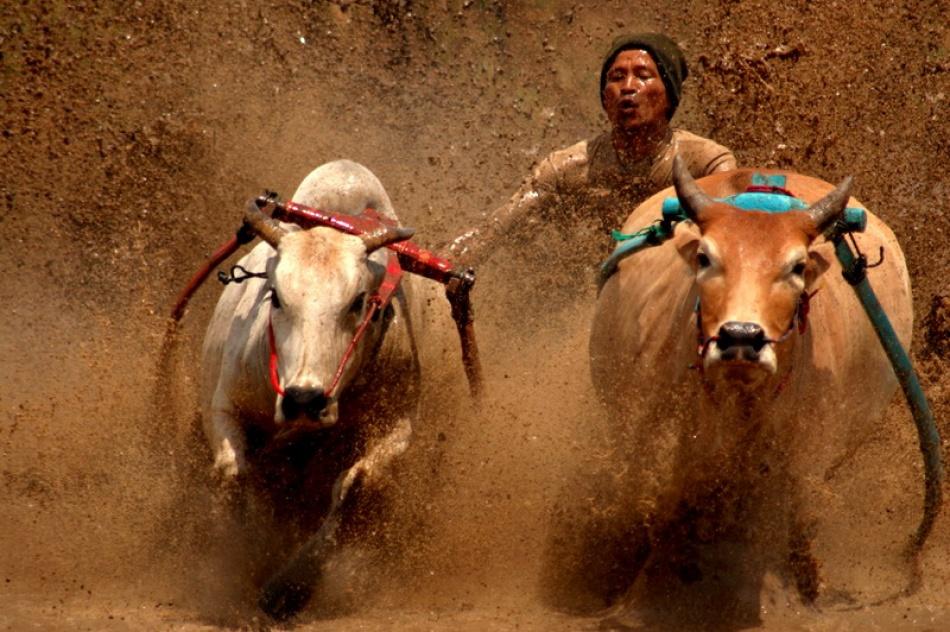 A piece of fine art art photography titled Bakacipak (Mud Bathing) by rudiegusteno