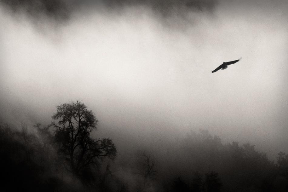 A piece of fine art art photography titled Bird  by Dare Turnsek