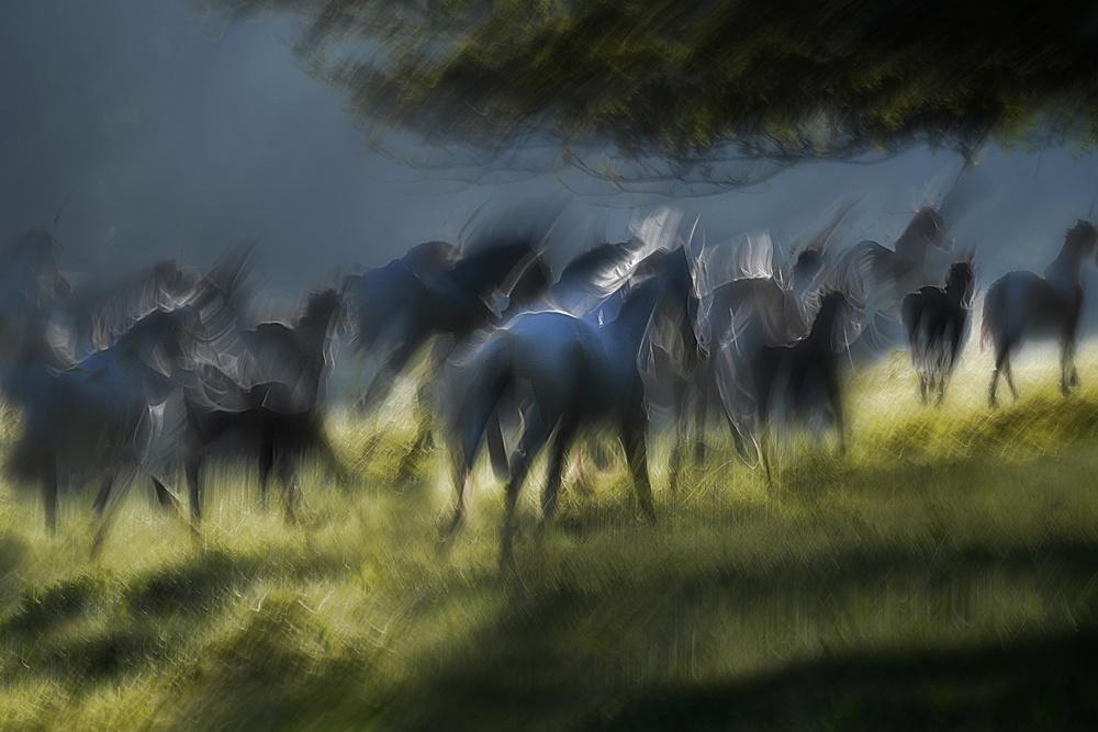 A piece of fine art art photography titled Silhuet by milan malovrh