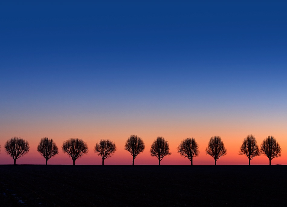 A piece of fine art art photography titled Trees Watching Sunrise by Larry Lefever