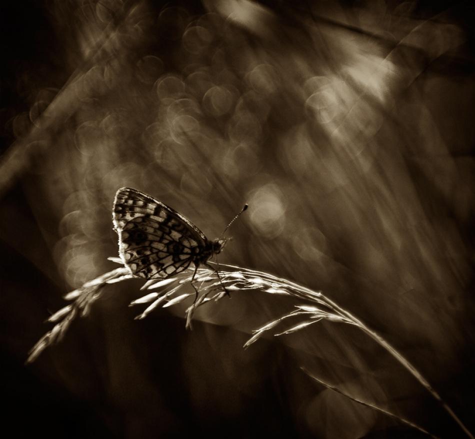 A piece of fine art art photography titled Untitled by Juha Saransalmi