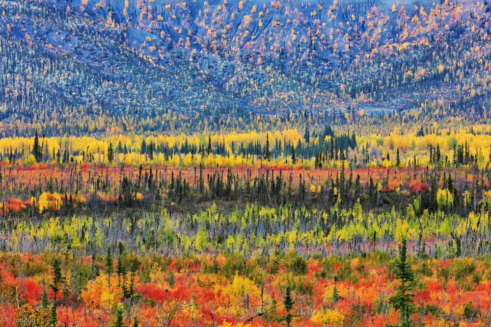 View this piece of fine art photography titled Fall Color in The Mountain by Jun Zuo