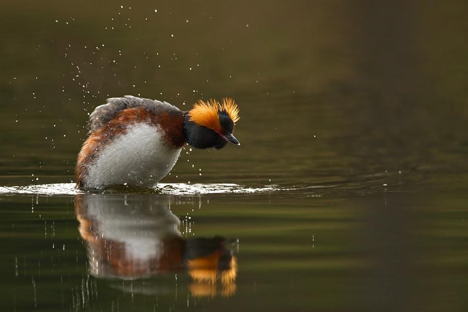 A piece of fine art art photography titled Preparing a Dive by Henrik Just