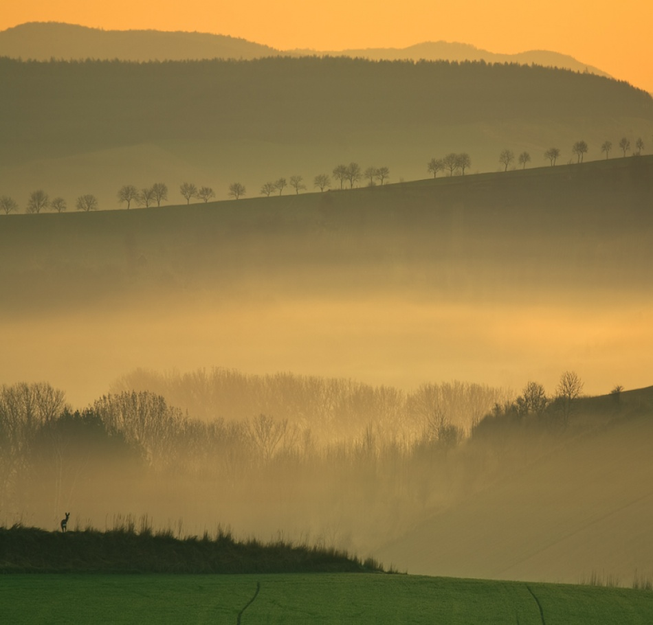 A piece of fine art art photography titled Morning by Krzysztof Browko