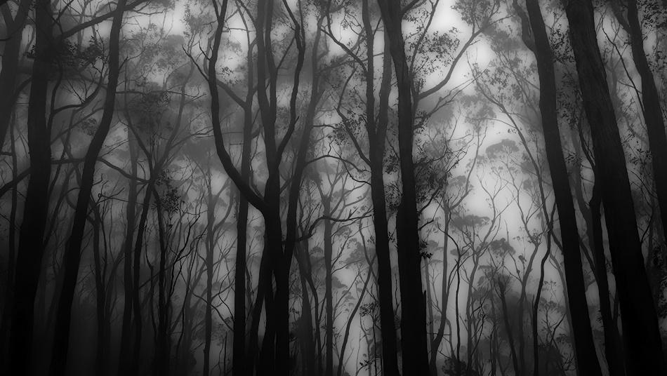 A piece of fine art art photography titled Misty by dougi