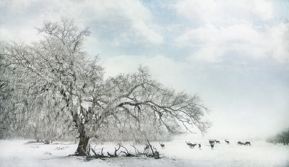 A piece of fine art art photography titled A Wintertale by Jörg Hubrich