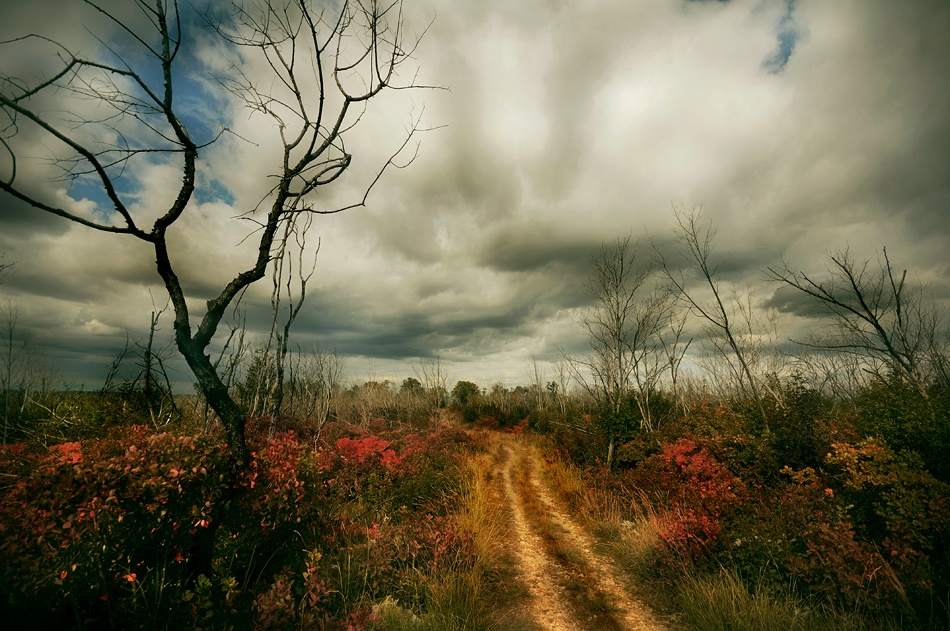A piece of fine art art photography titled Road to Autumn II by Sandi Gorkic
