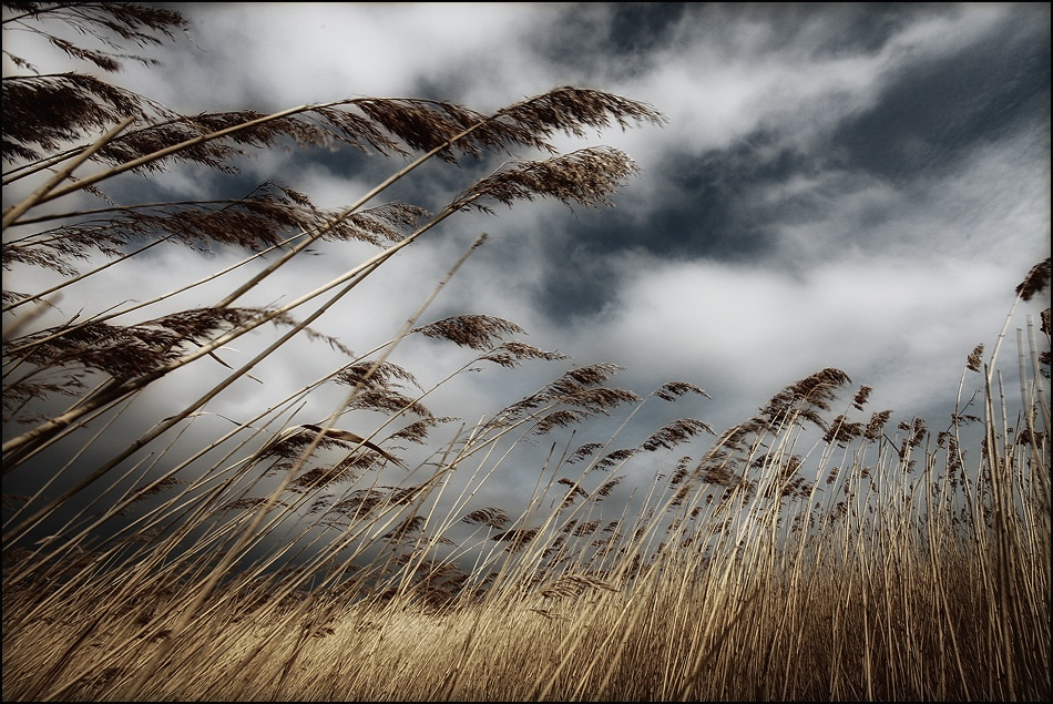 A piece of fine art art photography titled **wind** by Melanie Brunzel (Foto-Graefin)