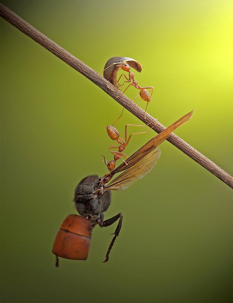 A piece of fine art art photography titled Hard Work by Heri Wijaya