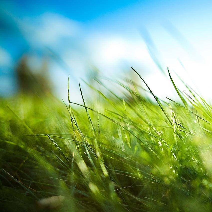 A piece of fine art art photography titled Summerness by benoit paille
