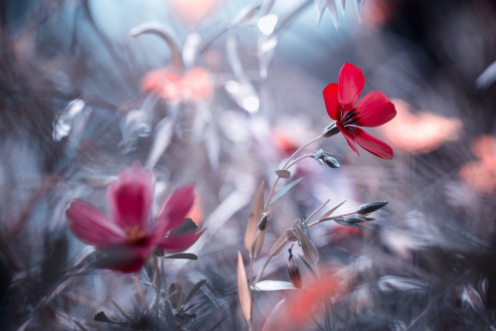 A piece of fine art art photography titled Une Fleur, Une Histoire by Fabien BRAVIN
