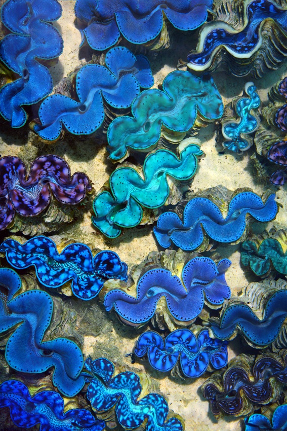 A piece of fine art art photography titled Blue Clams by Alex Cearns