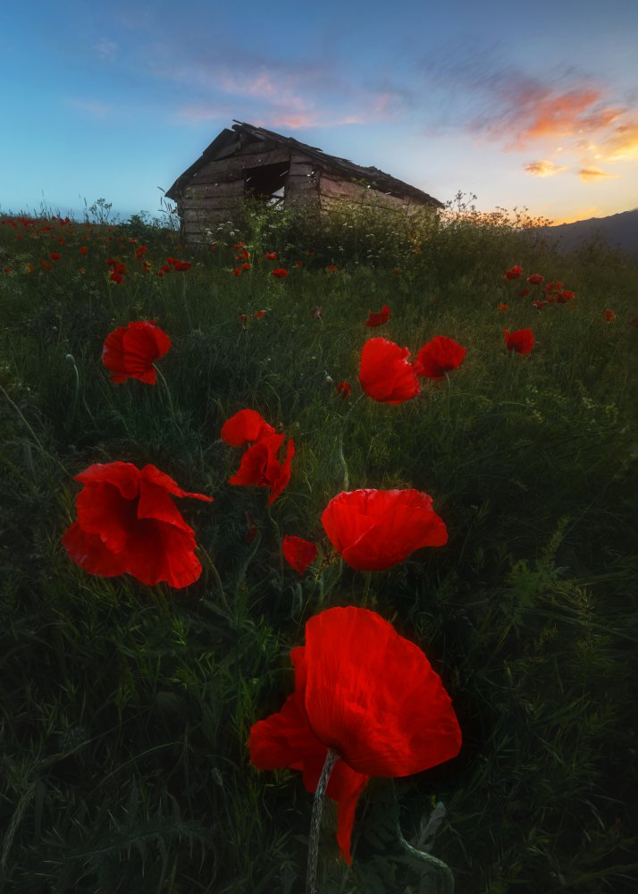 View this piece of fine art photography titled Talesh by Pedram Mirsadeghi
