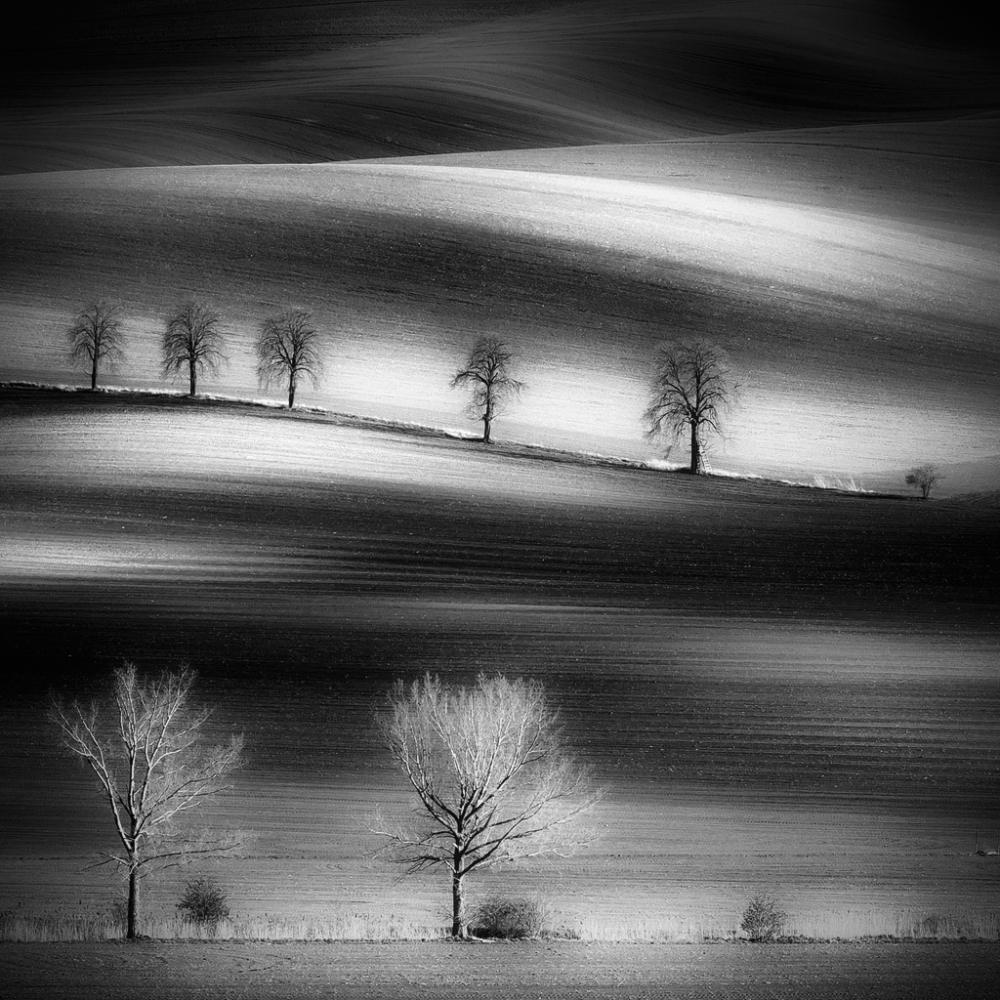 A piece of fine art art photography titled Trees by Piotr Krol (Bax)