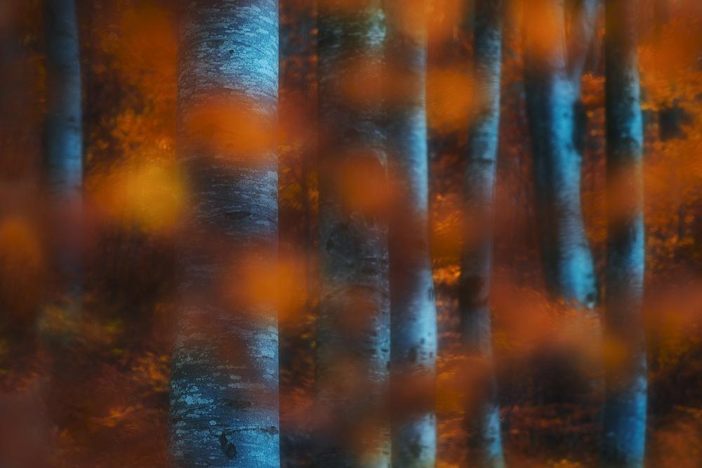 A piece of fine art art photography titled Hidden Forest by Szabo Zsolt Andras