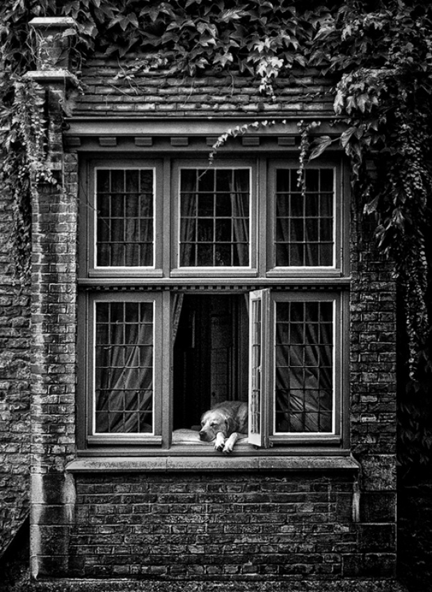 A piece of fine art art photography titled How Much Is That Doggie by Geert Deleu