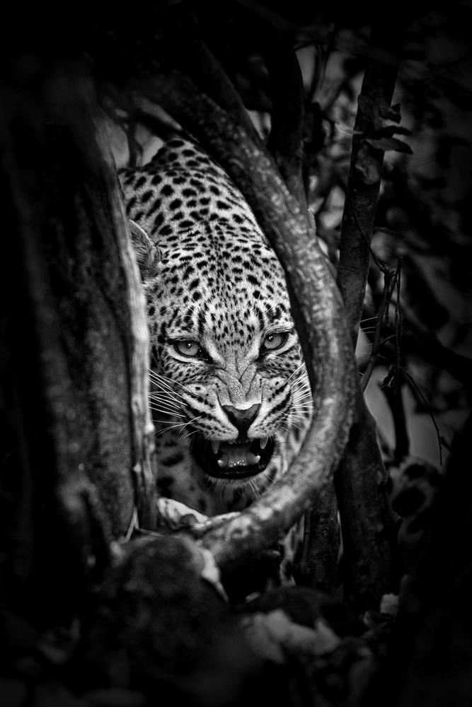 'Leopard's Lair'