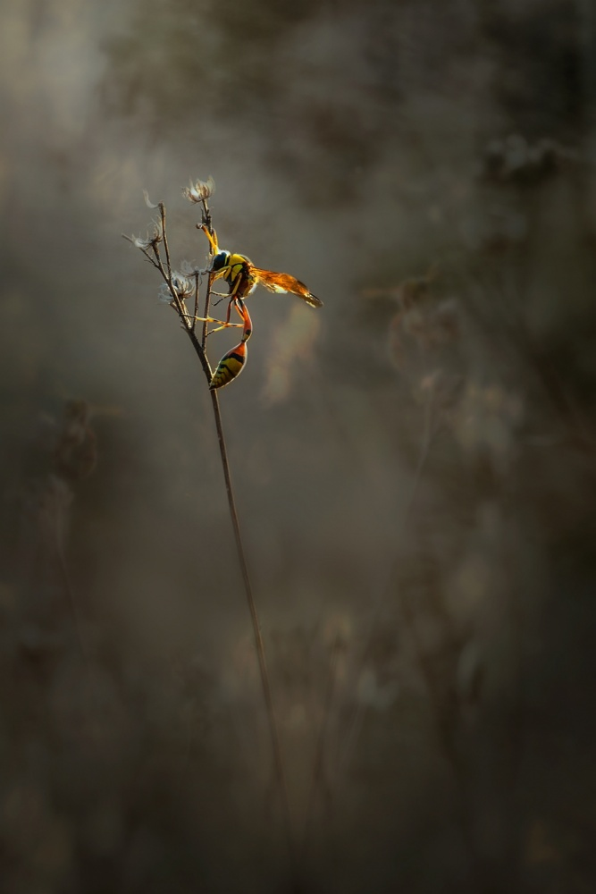 A piece of fine art art photography titled In the Morning by Budi Gunawan