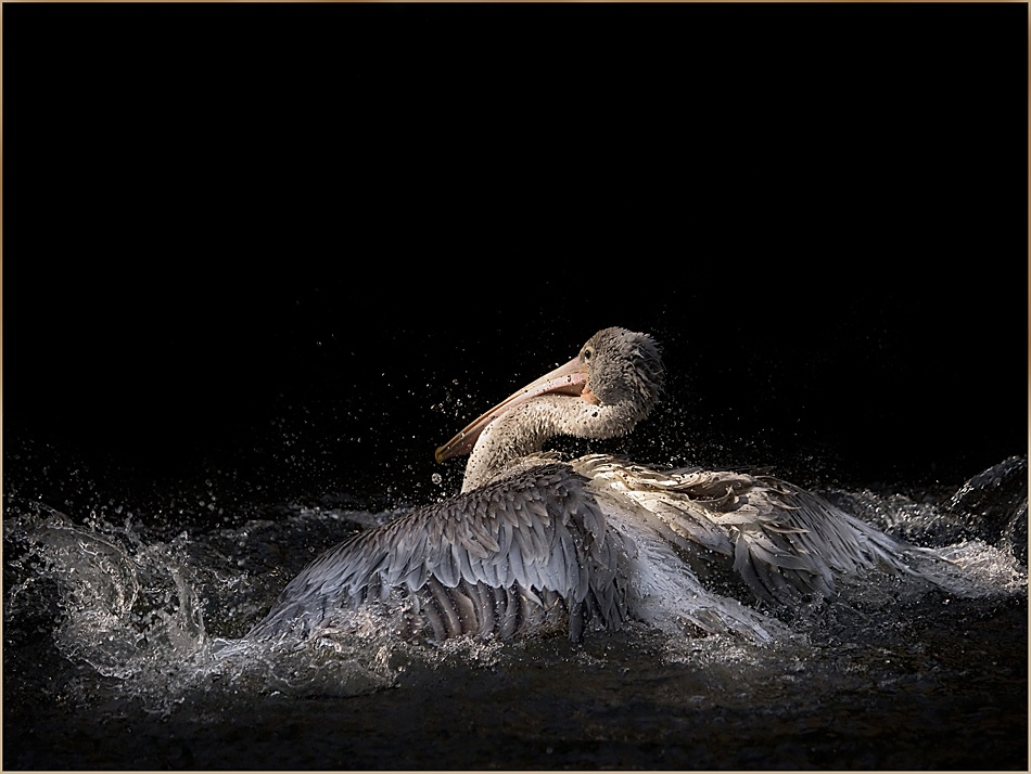 A piece of fine art art photography titled Splashing by Paula Loonen