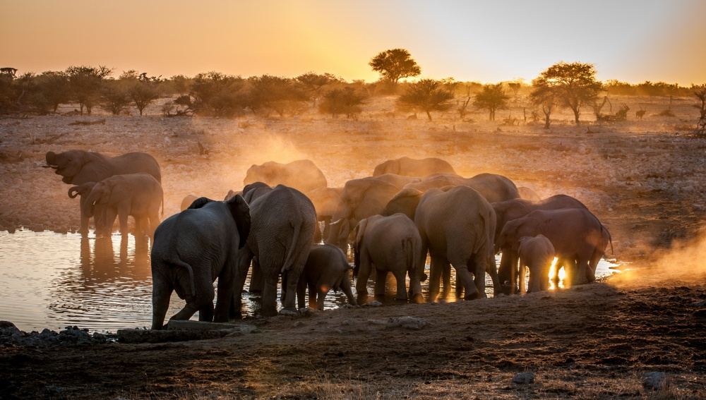 A piece of fine art art photography titled Elephant Huddle by Simon van Ooijen