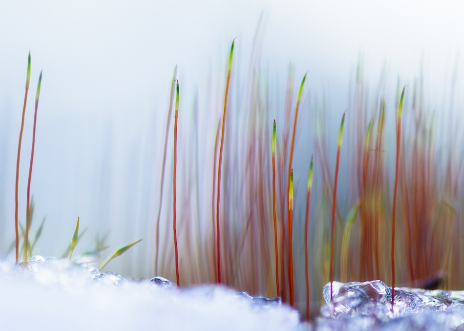 A piece of fine art art photography titled Spring by Joni Niemelä