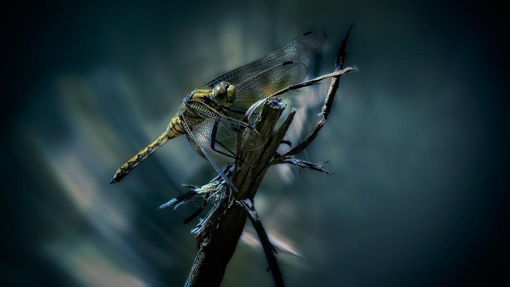A piece of fine art art photography titled Libelle by Jörg Wolfshöfer