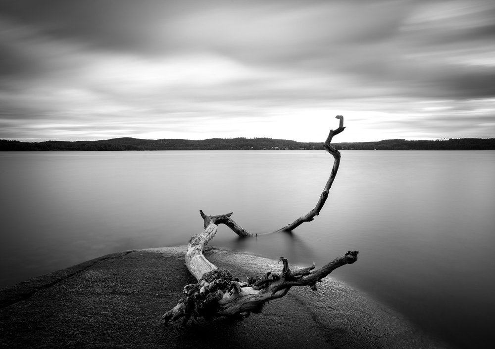 Branch long exposure lake