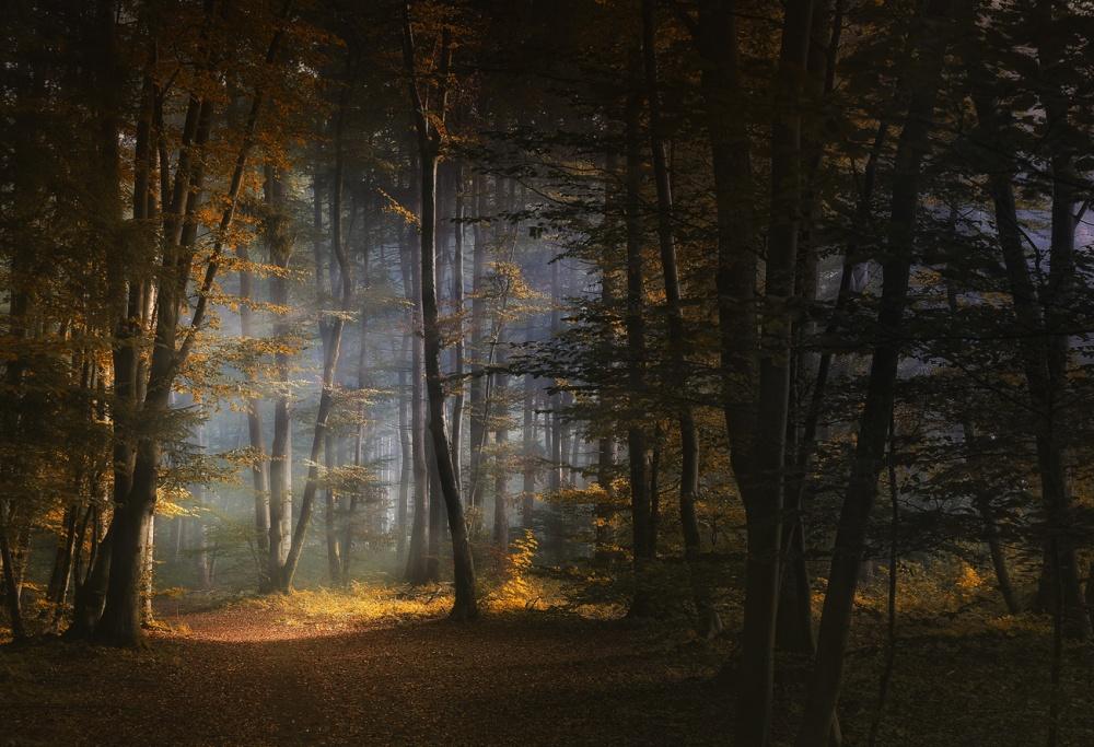 A piece of fine art art photography titled November Morning by Norbert Maier