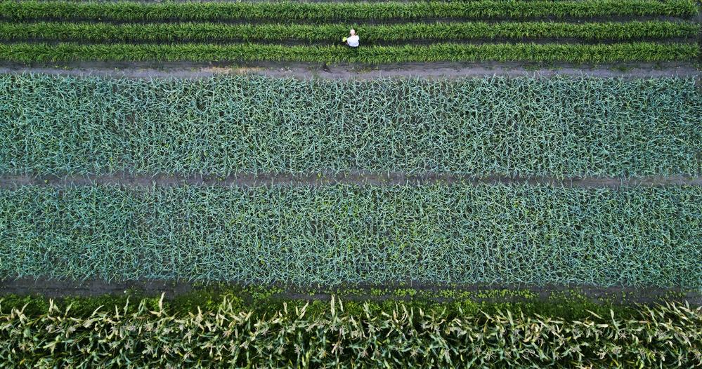 A piece of fine art art photography titled Food Source by Zhou Chengzhou