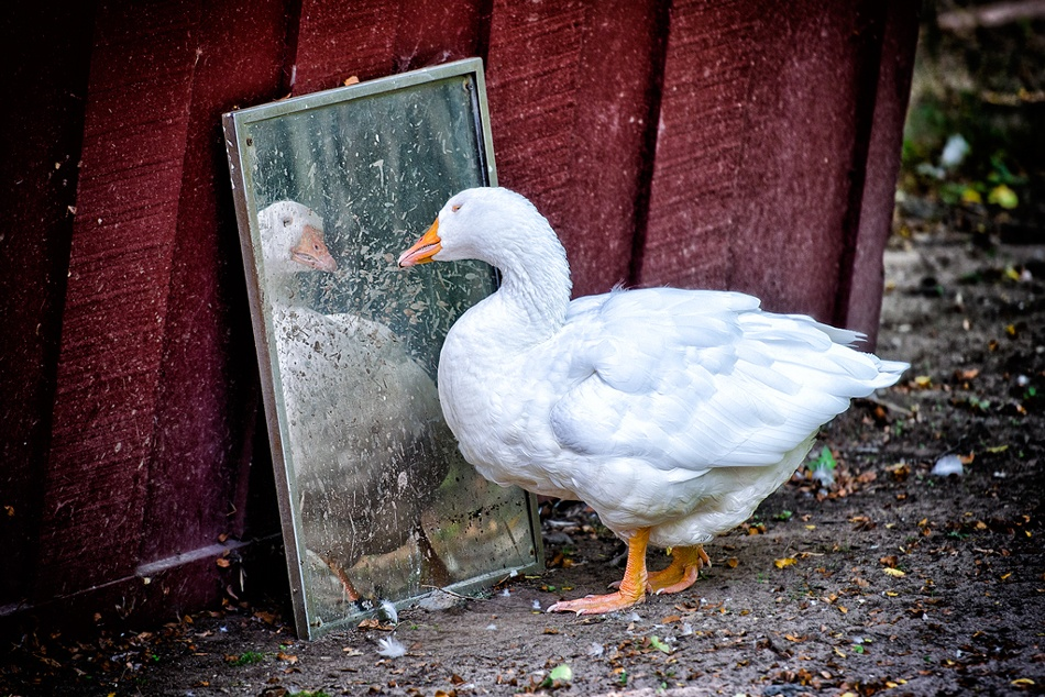 A piece of fine art art photography titled Mirror, Mirror On the Wall by Donald Scarinci