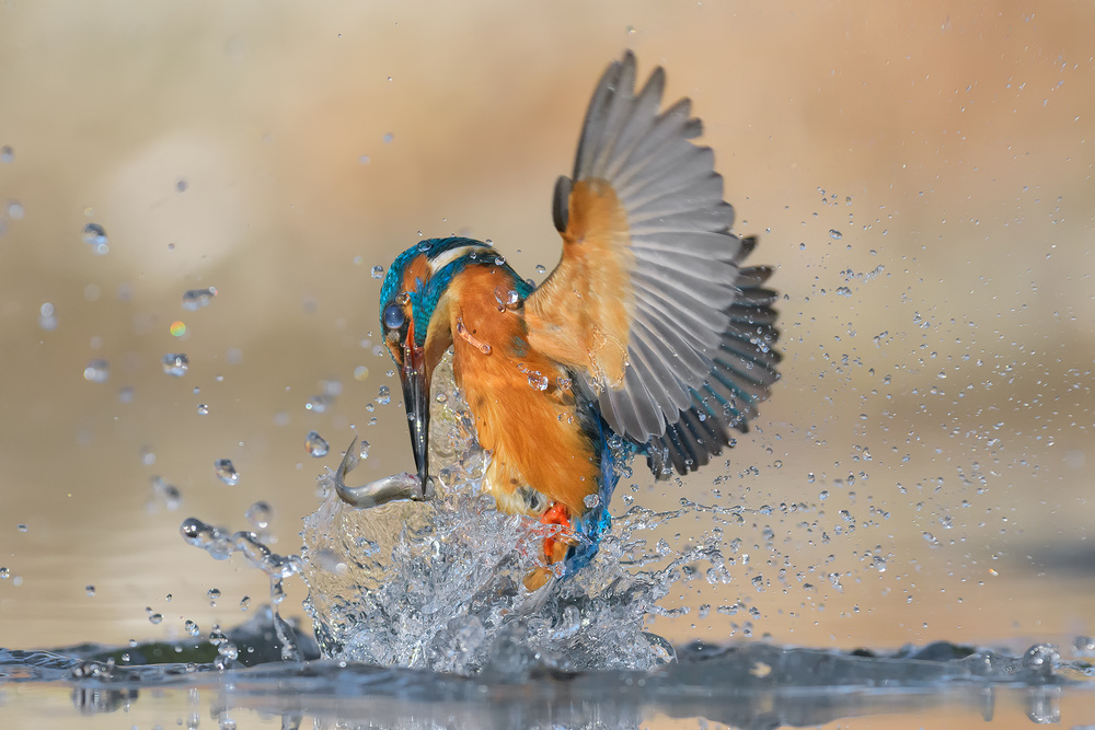 View this piece of fine art photography titled Water games by Alessandro Rossini