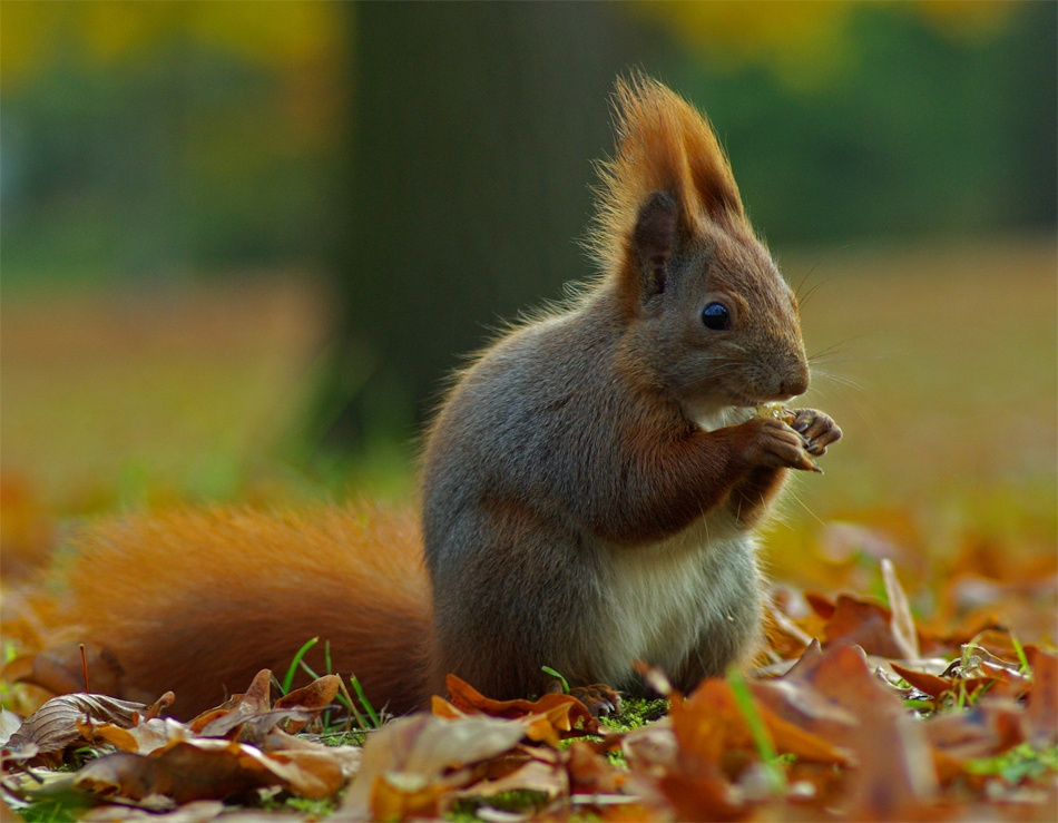 A piece of fine art art photography titled Squirrel In Autumn by Guilhem