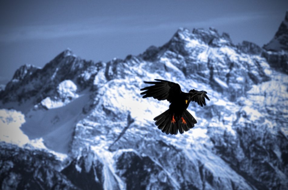 A piece of fine art art photography titled The Crow by Paolo Ordigoni