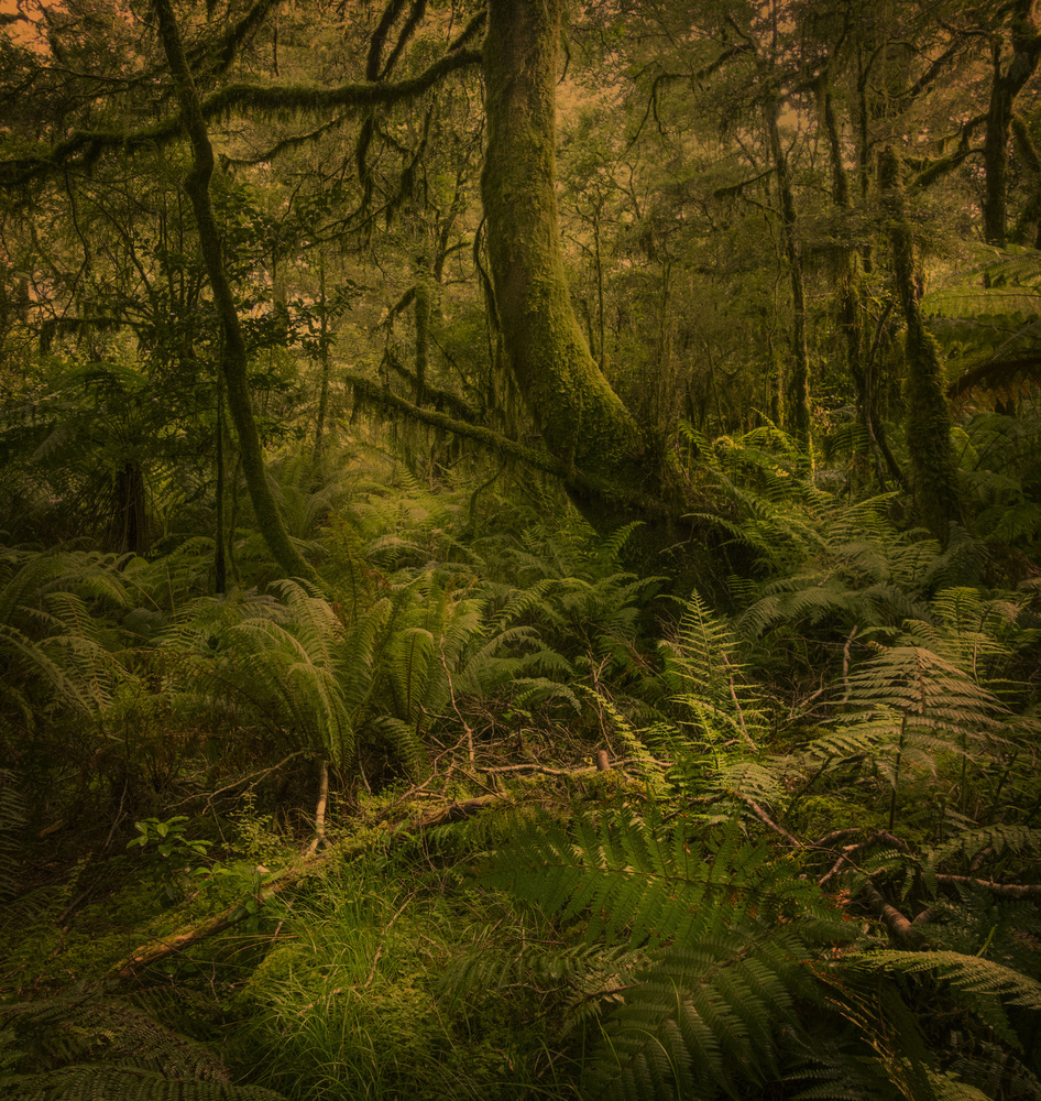 Early Morning Milford Track