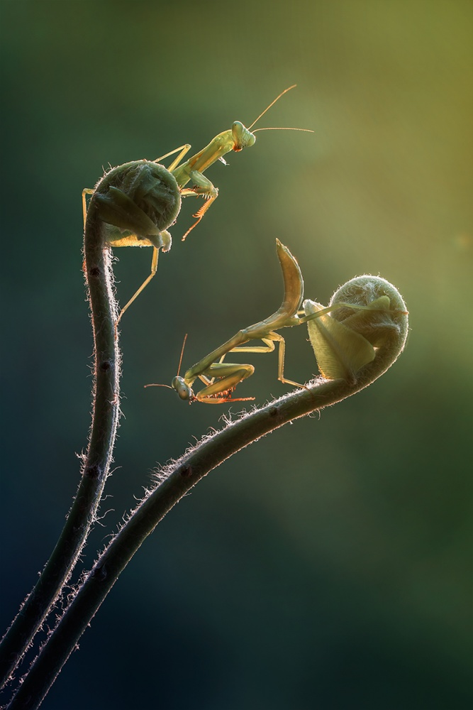 A piece of fine art art photography titled Two Friends Playing Together by Yusri Harisandi