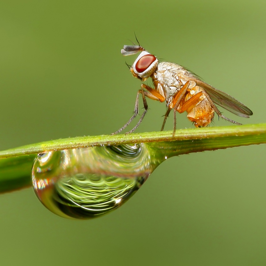 A piece of fine art art photography titled A Fly and Droplets by Harianto Keng
